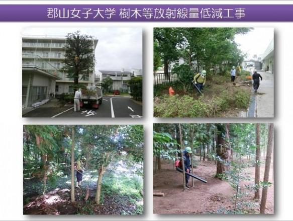 樹木除染作業報告写真(1)