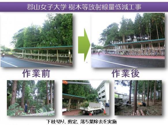 樹木除染作業報告写真(2)