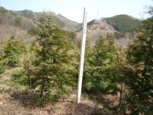 安子ヶ島開成の杜